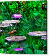 Water Lilly Acrylic Print by William Wetmore