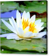 Water Lily - Digital Painting Acrylic Print