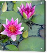 Water Lily #2 Acrylic Print