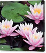 water lily 91 Sunny Pink Water Lily Acrylic Print