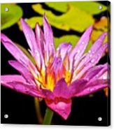 Water Lily After Rain 2 Acrylic Print
