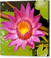 Water Lily After Rain 4 Acrylic Print