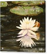 Water Lily And Pads Acrylic Print