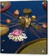 Water Lily And Platters Acrylic Print
