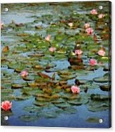 Water Lily Ballet Acrylic Print