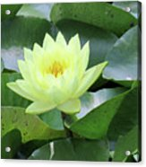 Water Lily - Burnin' Love 14 Acrylic Print
