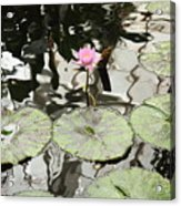 Water Lily Canvas Acrylic Print