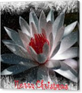 Water Lily Christmas Acrylic Print