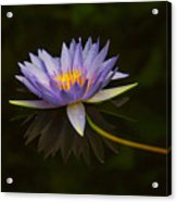 Water Lily Close Up Acrylic Print