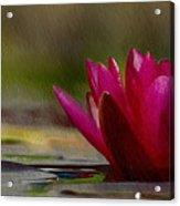 Water Lily - Id 16235-220248-4550 Acrylic Print