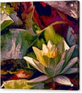 Water Lily In Living Color Acrylic Print