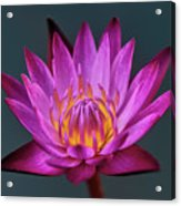 Water Lily Iv Acrylic Print