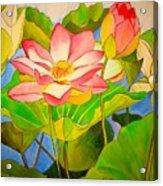 Water Lily Lotus Acrylic Print