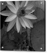 Water Lily Monochrome Acrylic Print