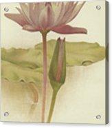 Water Lily  Nymphaea Zanzibarensis Acrylic Print