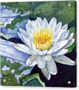 Water Lily Acrylic Print by Sam Sidders