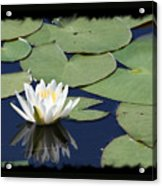 Water Lily With Black Border Acrylic Print