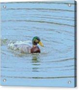 Water Off A Ducks Back Acrylic Print