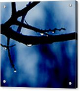 Water On Branch Acrylic Print