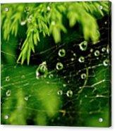 Water Orbs In Cobweb. Acrylic Print