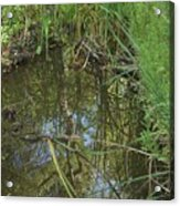 Water Pond Reflection In Peters Canyon Acrylic Print
