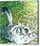 Water Queen Acrylic Print