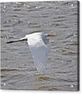 Water Skimming Acrylic Print