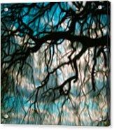 Water Willow Acrylic Print