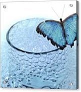 Water With Butterfly Acrylic Print