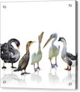 Waterbirds Acrylic Print