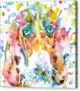 Watercolor Basset Hound Acrylic Print