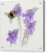 Watercolor Bumble Bee Acrylic Print