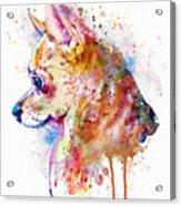 Watercolor Chihuahua  Acrylic Print