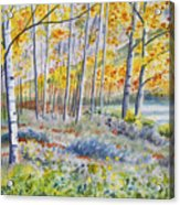 Watercolor - Colorado Autumn Forest And Landscape Acrylic Print