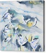 Watercolor - Crane Ballet Acrylic Print