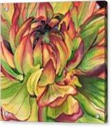 Watercolor Dahlia Acrylic Print