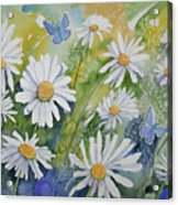 Watercolor - Daisies And Common Blue Butterflies Acrylic Print