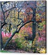 Watercolor Forest Acrylic Print by Lorraine Devon Wilke
