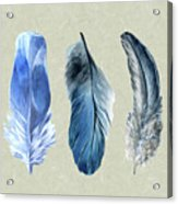 Watercolor Hand Painted Feathers Acrylic Print