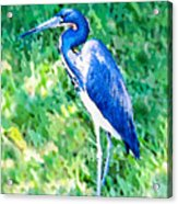 Watercolor Heron In Grass Acrylic Print