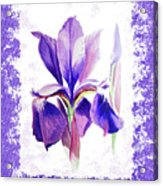 Watercolor Iris Painting Acrylic Print