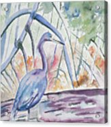 Watercolor - Little Blue Heron In Mangrove Forest Acrylic Print