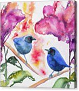 Watercolor - Masked Flowerpiercers With Flowers Acrylic Print