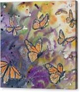 Watercolor- Monarchs In Flight Acrylic Print