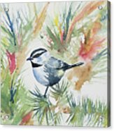 Watercolor - Mountain Chickadee And Pine Acrylic Print