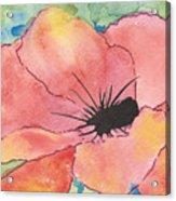 Watercolor Poppy Acrylic Print