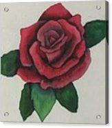 Watercolor Rose Acrylic Print