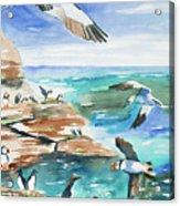 Watercolor - Seabirds Of The North Atlantic Acrylic Print