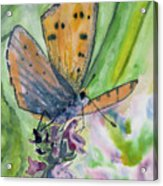 Watercolor - Small Butterfly On A Flower Acrylic Print