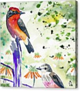Watercolor - Vermilion Flycatcher Pair In Quito Acrylic Print